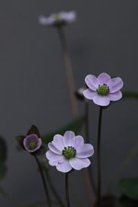 Simg_0654